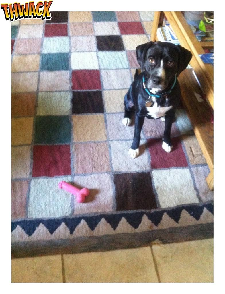 De hond heeft het speeltje van mama gevonden op de slaapkamer!